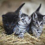 猫のエサ代が高くて困る。多頭数飼いのエサの選び方与え方。
