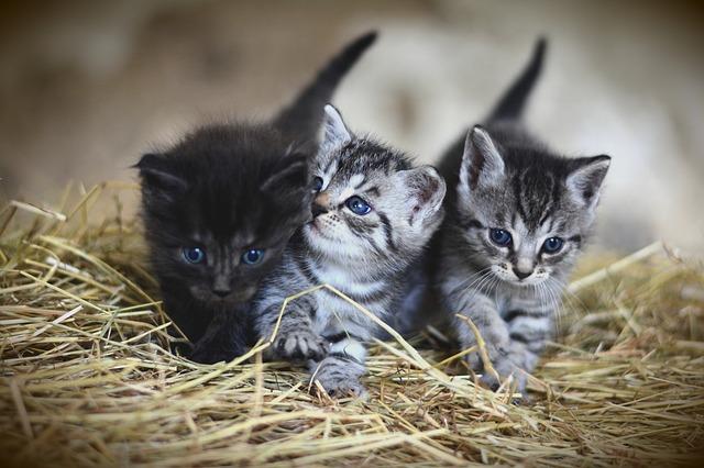【猫のエサ代】が高くて困る?おすすめのエサの選び方・与え方!