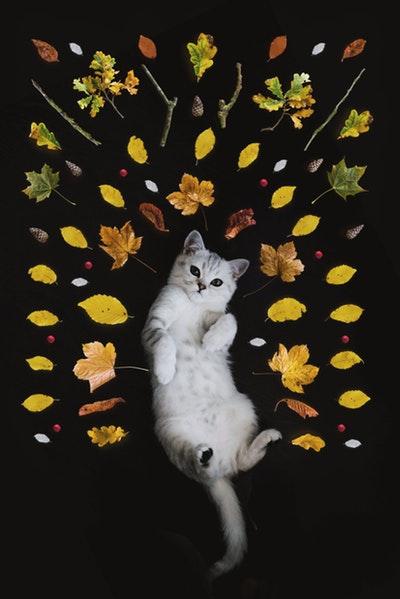 猫の【多頭数飼い】の場合のエサの与え方
