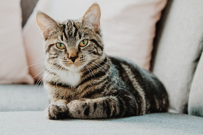 【猫がなつく】には?誰にでも簡単にできる方法【コツ】を紹介!