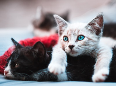 【猫のエサ代】が高い!おすすめの選び方・与え方