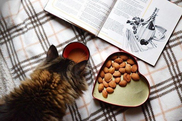 【猫餌の量・回数・量の計算】