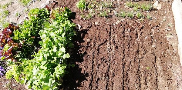 春の種まき!家庭菜園で野菜(ケール、スープセロリ)の種をまいた!