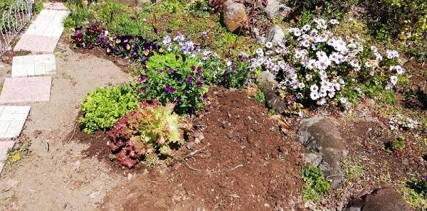 葉大根を全て抜いた後です。スッキリしました。いつでも次がまけるように、堆肥を入れて土をよく混ぜておきました。