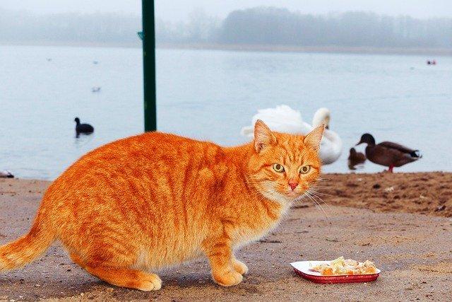 猫にウェットフード!高いが食いつきが良くておすすめ!