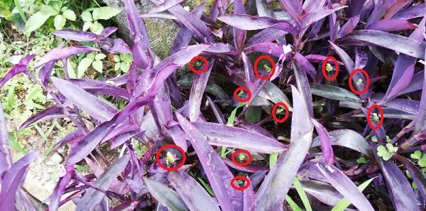 最近は、小さなカエルが大量発生しました。赤丸が全てカエルです。目につくだけで10匹いました。