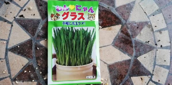 蒔いたネコ草のタネ