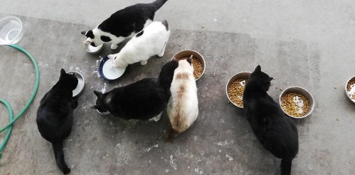 脂肪を蓄えて程よく肉が付いてきた猫たち。