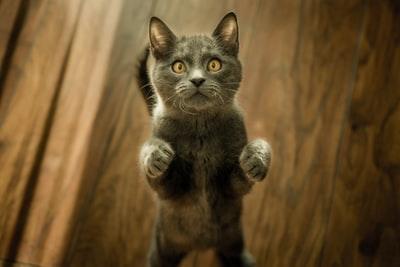 今年の冬は寒いがネコ元気!なぜか風邪も引かない!なぜだろう?