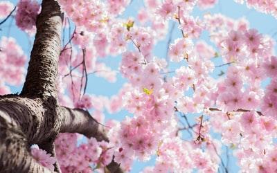 HSPは春が苦手で体調不良になりやすく憂鬱?自律神経が乱れるから?