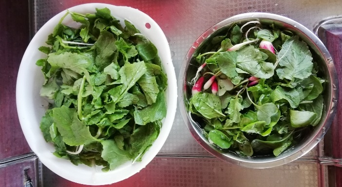 左は同時期に種まきをした葉大根、右側がルッコラと二十日大根。