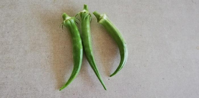 家庭菜園でオクラ栽培!種まきから収穫まで!