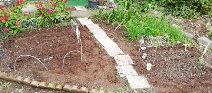 ☑植えた野菜の苗、全体の様子
