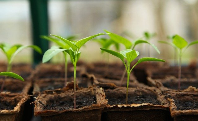 秋冬野菜の苗植え!今年は色々な野菜を植えてみた!はたして育つのか?