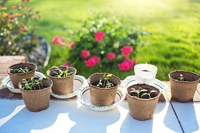 秋冬野菜の苗植え!今年は色々な野菜を植えてみた!